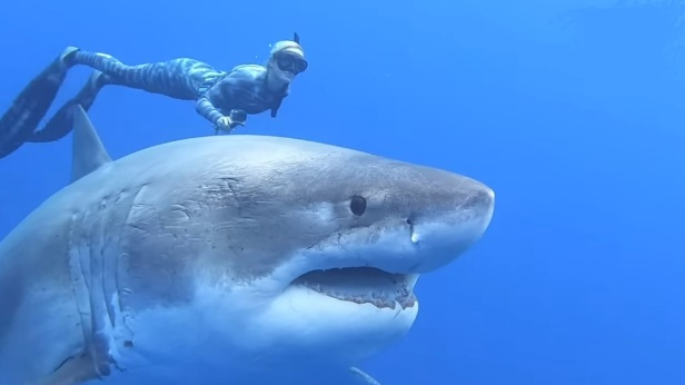 white-Shark-Smartphonegreece