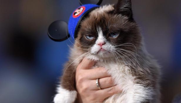 Grumpy-Cat-4-Smartphonegreece.jpg.png