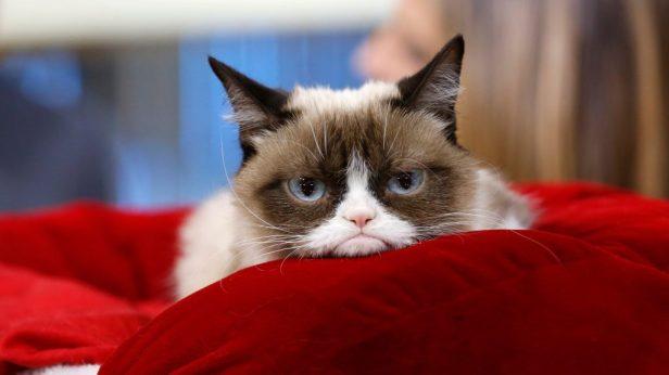 Grumpy-Cat-Smartphonegreece