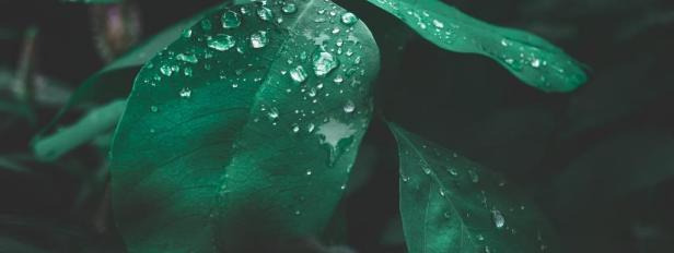 plants-breath-Smartphonegreece (1)