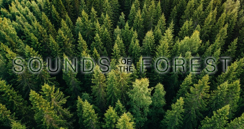 Aerial top view of summer green trees in forest in rural Finland