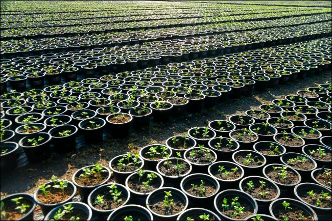 xpotted-plants-in-a-row.jpg.pagespeed.gp+jp+jw+pj+ws+js+rj+rp+rw+ri+cp+md.ic.HM9I9MEsgF